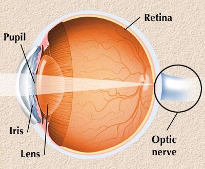 Interactive Health Eye Anatomy